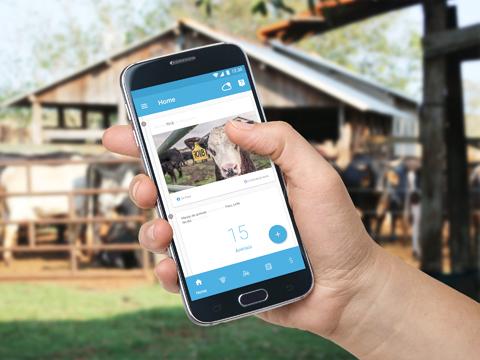 Telefónica premia tres proyectos para impulsar la innovación sostenible