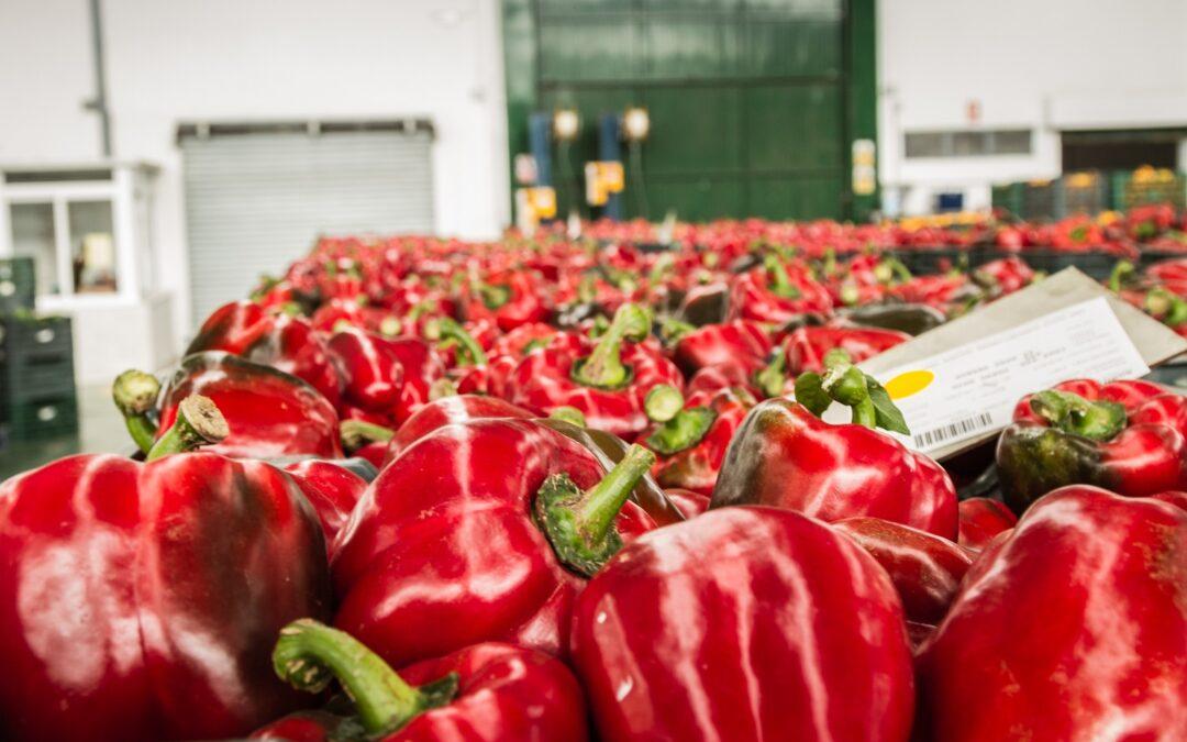 La Junta destaca el reconocimiento de la UE a la digitalización del sector agroalimentario en Andalucía